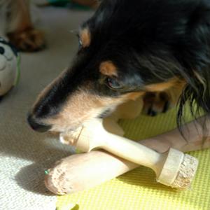 [犬のしつけ]おもちゃで遊ぶ犬