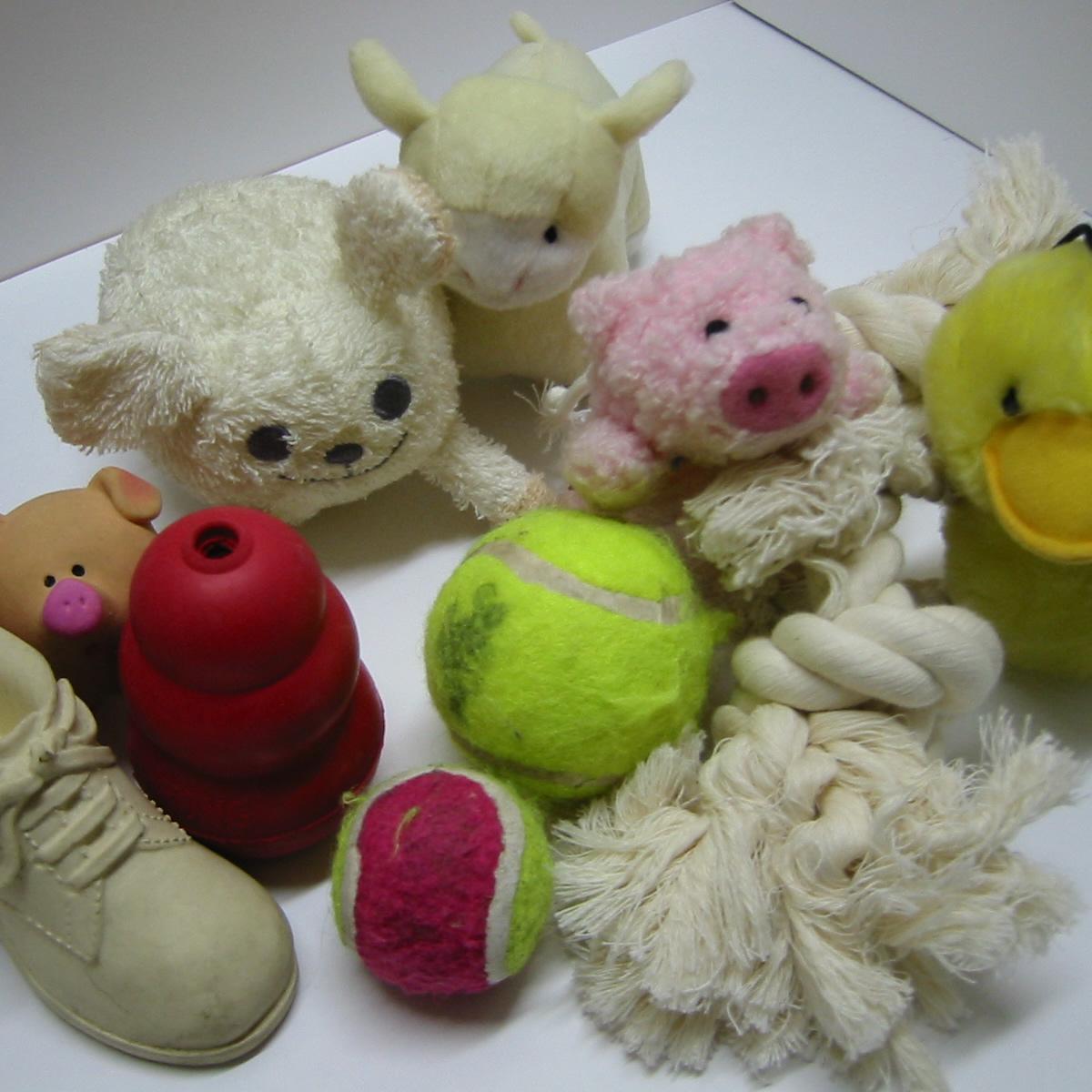 [犬のしつけ]いろいろなおもちゃ