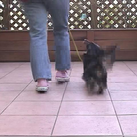 [犬のしつけ]お散歩